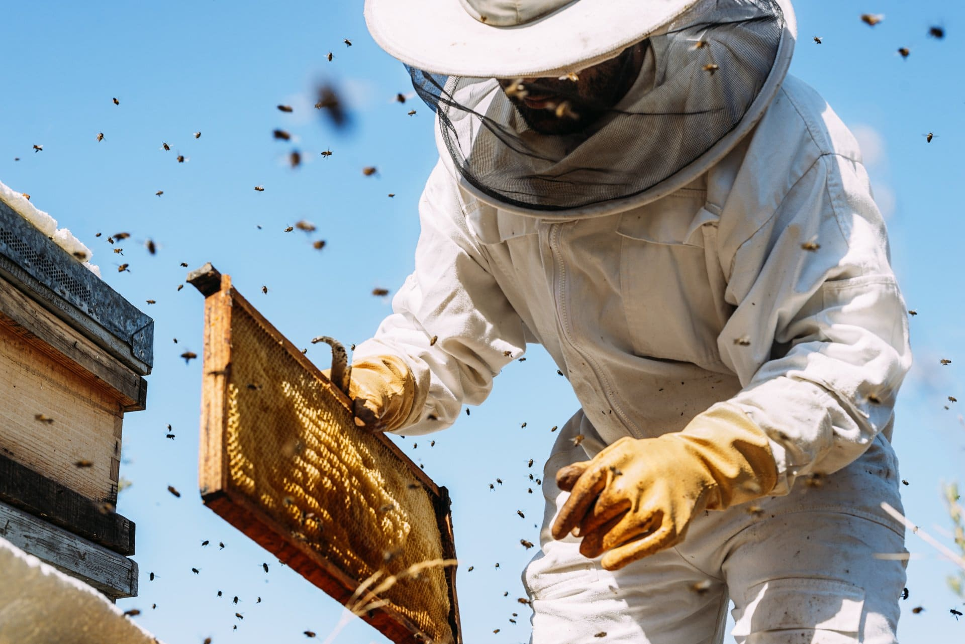 A beekeeper moving a bee colony.