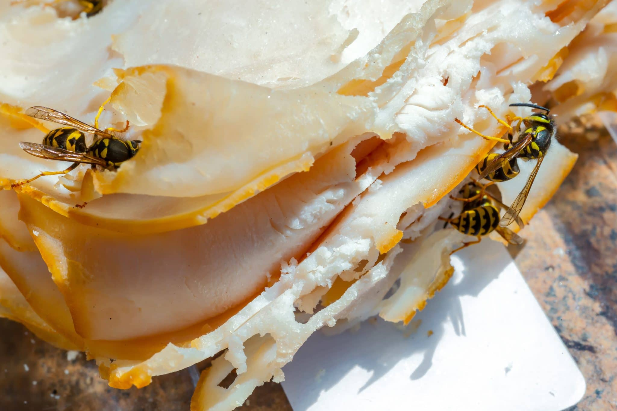 yellow jackets are feeding on a ham sandwich.